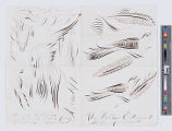 [Paper with drawings of ornamental penmanship birds and feathers]